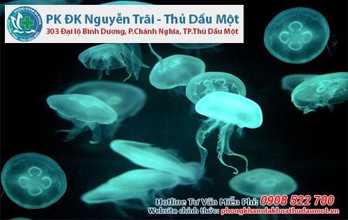 Cách điều trị tình trạng dị ứng với sứa biển