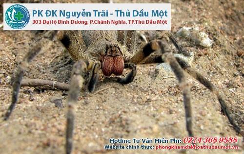 Chất độc có trong loài nhện cực độc