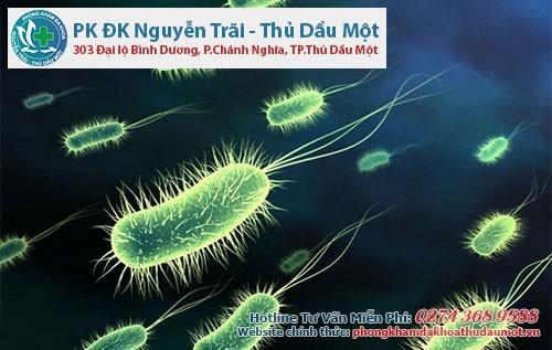 Khuẩn E.coli là một trong những nguyên nhân gây viêm bàng quang